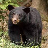 bear-pg