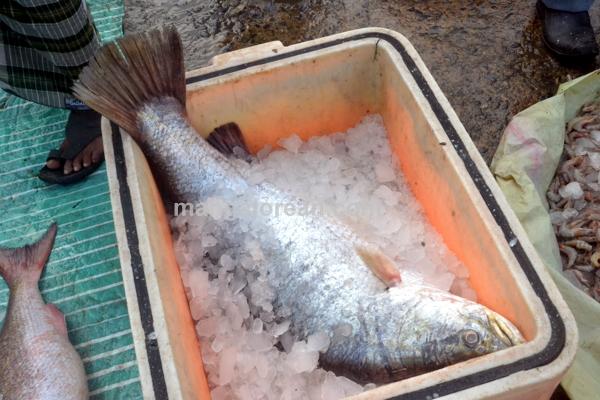 fish-market-20150802-003