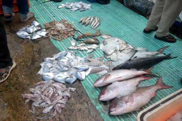 fish-market-20150802-004
