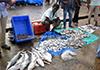 fish-market-20150802-t-002