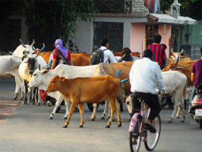 save-the-cow-campaign