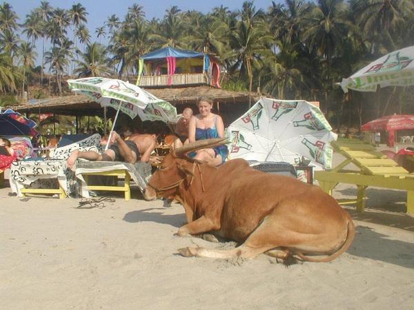02-Cowso-calangutebeach_Goa-001