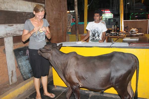 05-Cowso-calangutebeach_Goa-004