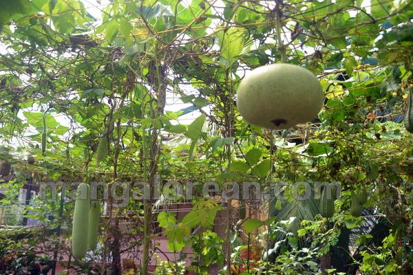 06-terrace-garden-005