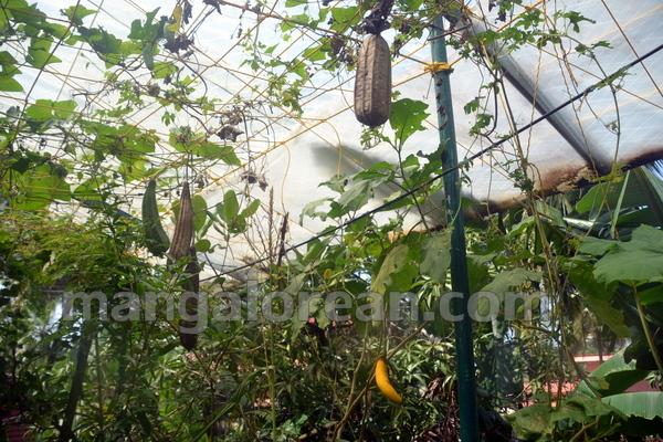 07-terrace-garden-006