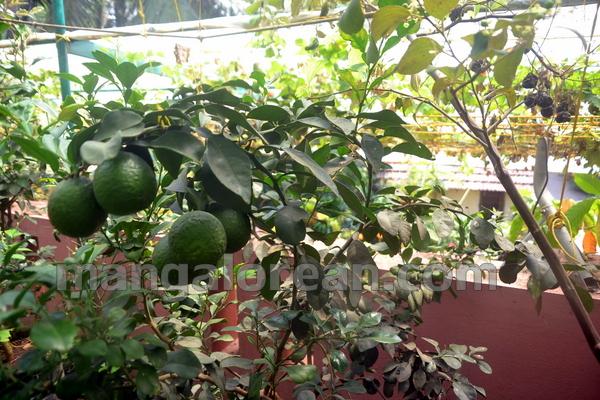 09-terrace-garden-008