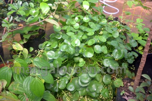 10-terrace-garden-009