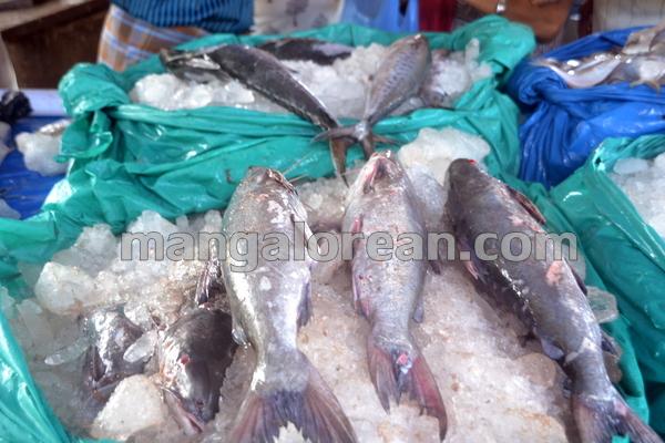14-fish-20151008-013