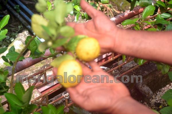 14-terrace-garden-013