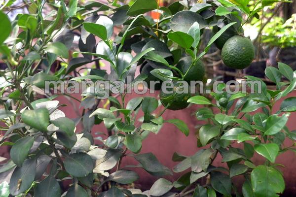 15-terrace-garden-014
