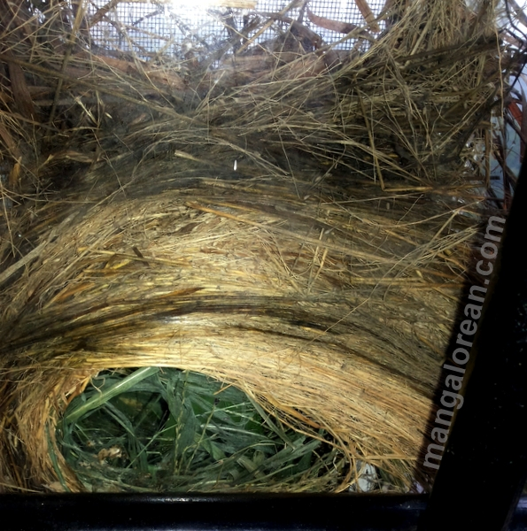 munia-nest-dr-maya-ahmed-002