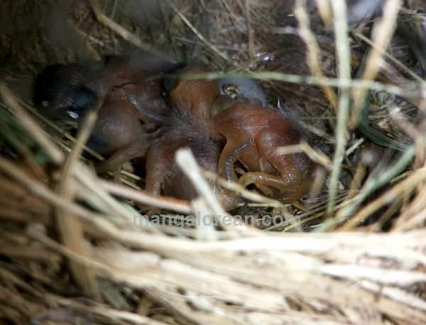 munia-nest-dr-maya-ahmed-005