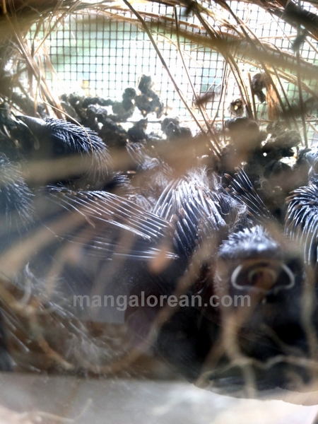 munia-nest-dr-maya-ahmed-006