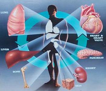 organs-001