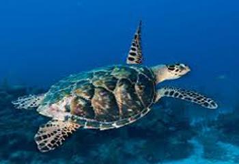 turtle-pg