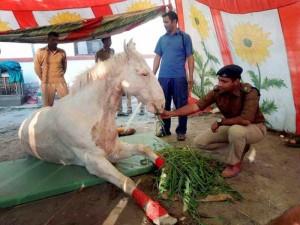 BJP-horse-20160318