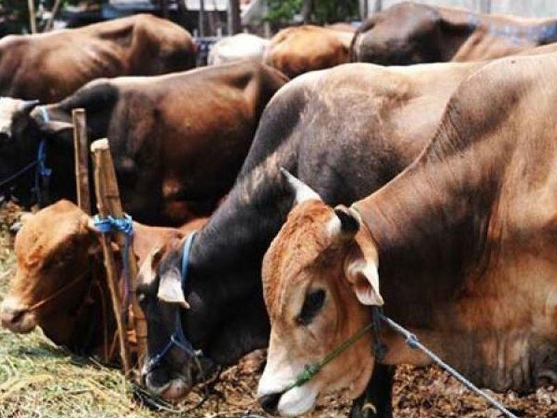 cattle-traders-muslim-afp-19032016-1