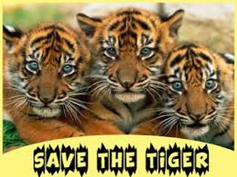 save-tiger-20160313