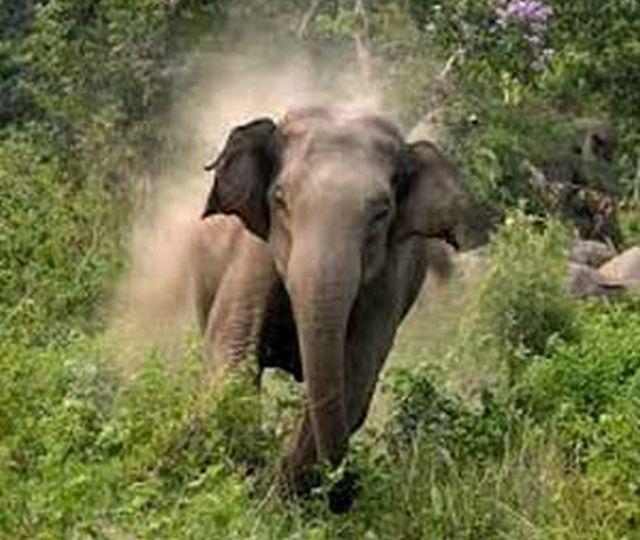 wild-elephant-30032016