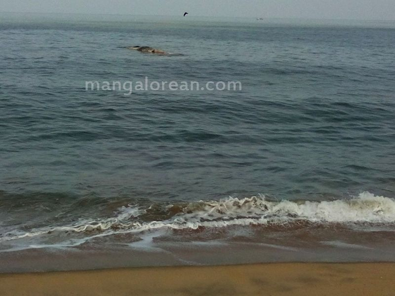 image003whale-someshwar-20160420-003