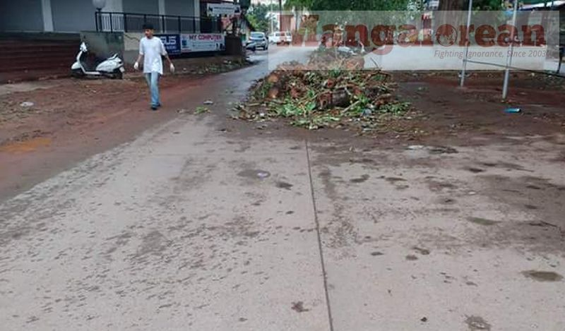 Ashwatha-Tree-crashing-down-Karangalpady-Mangaluru-01 (1)