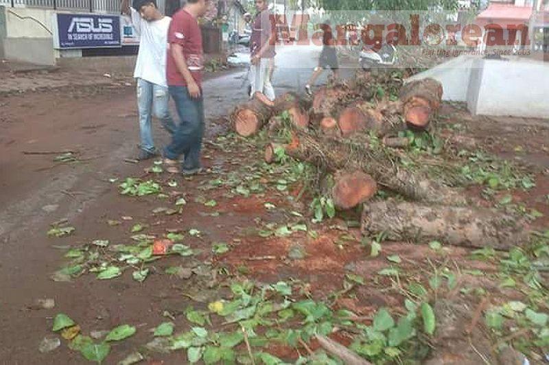 Ashwatha-Tree-crashing-down-Karangalpady-Mangaluru-01 (3)