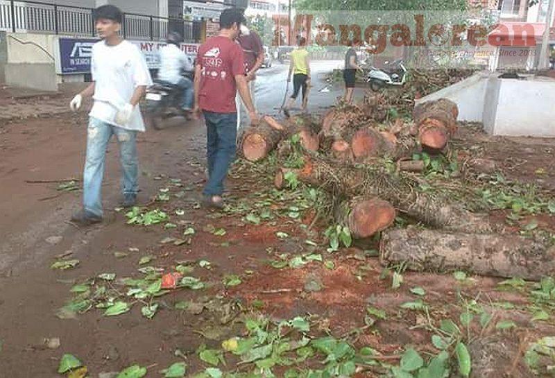 Ashwatha-Tree-crashing-down-Karangalpady-Mangaluru-01 (4)
