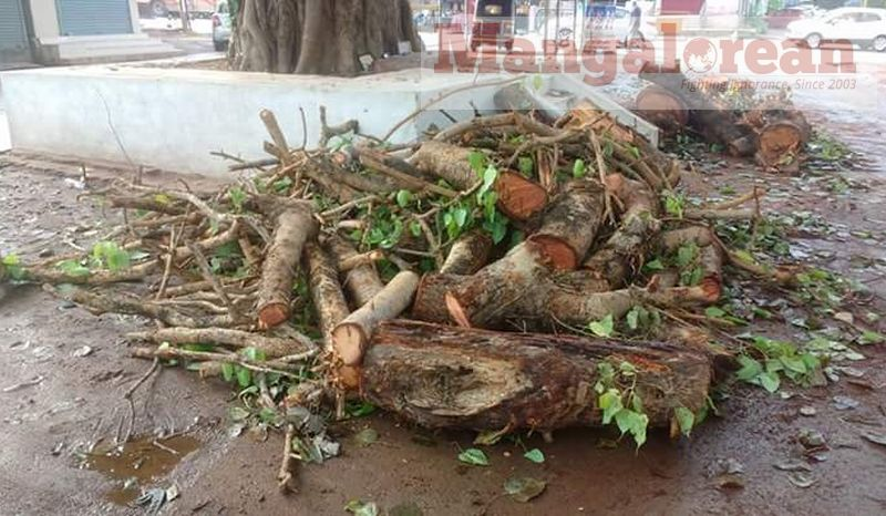Ashwatha-Tree-crashing-down-Karangalpady-Mangaluru-01 (7)