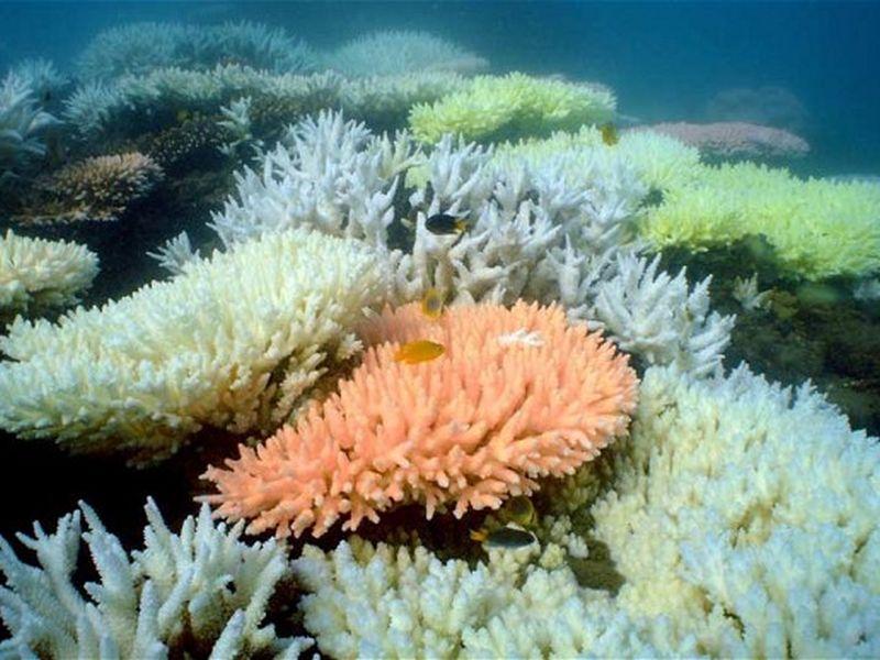 great-barrier-reef-20160530