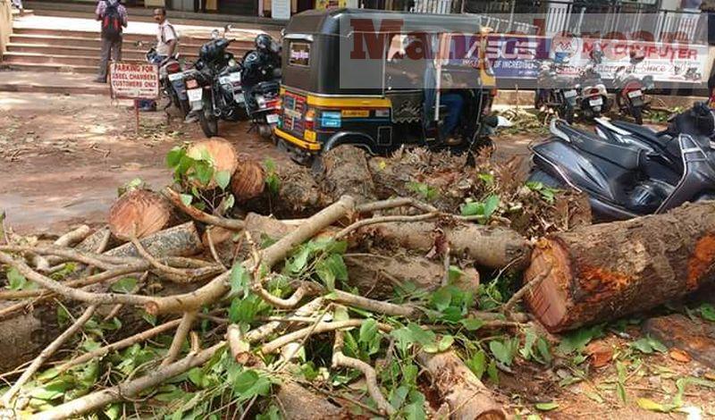 huge-Ashwatha-tree-crashing-down-Karangalpady-Mangaluru (1)