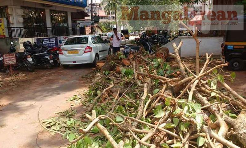 huge-Ashwatha-tree-crashing-down-Karangalpady-Mangaluru (2)