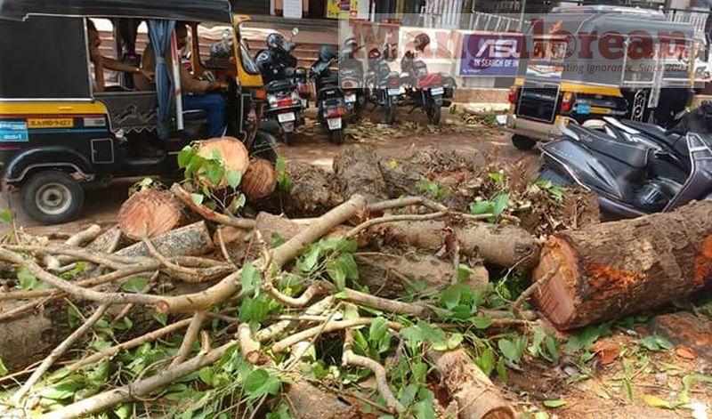 huge-Ashwatha-tree-crashing-down-Karangalpady-Mangaluru (3)