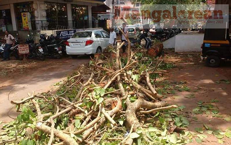 huge-Ashwatha-tree-crashing-down-Karangalpady-Mangaluru (4)