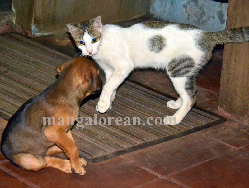 image001cat-dog-friend-020160505-001