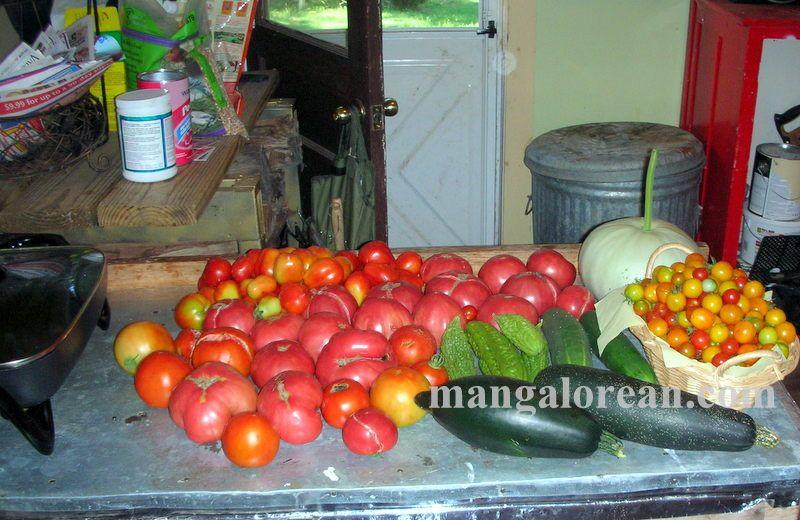 image001glen-leo-mendonca-kitchen-garden-020160521-001