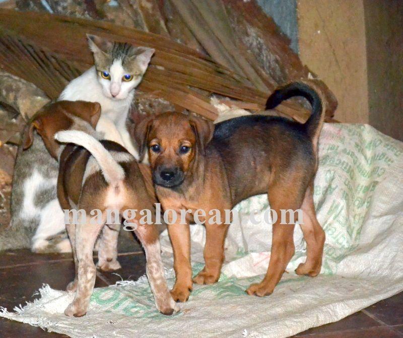 image002cat-dog-friend-020160505-002