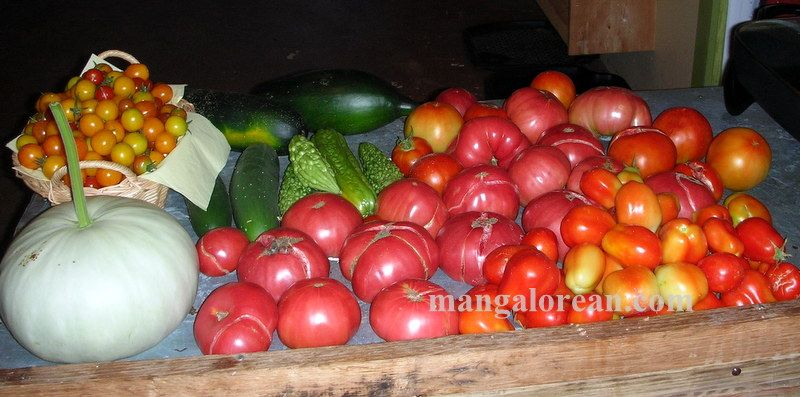image002glen-leo-mendonca-kitchen-garden-020160521-002