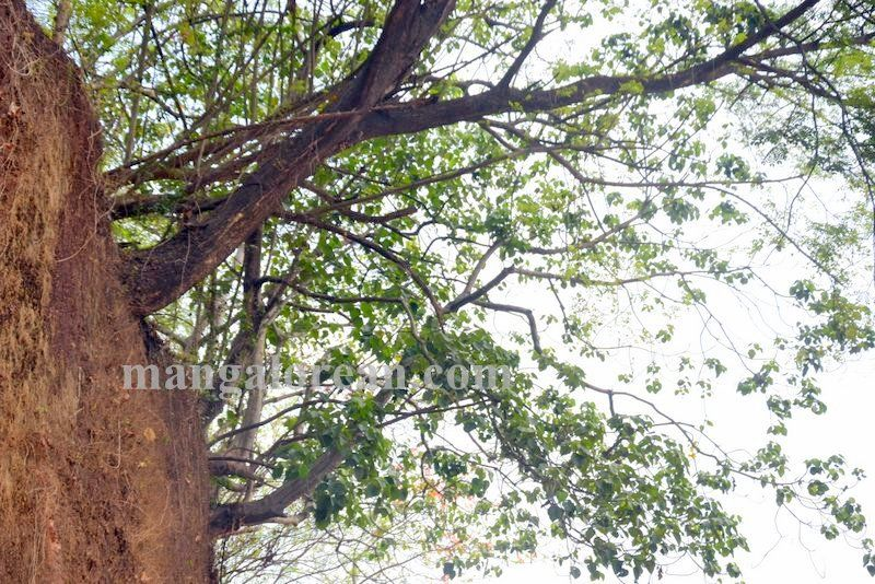 image002leaning-trees-020160521-002