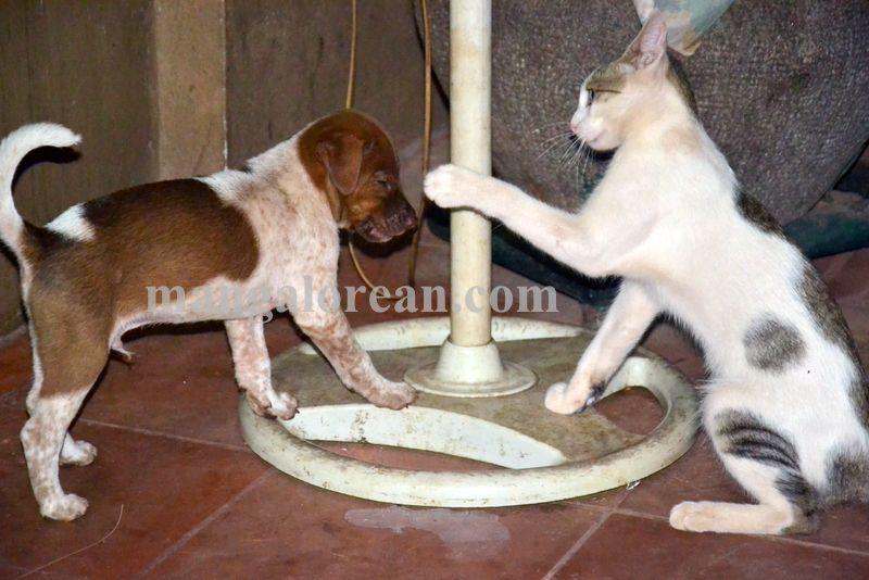 image003cat-dog-friend-020160505-003