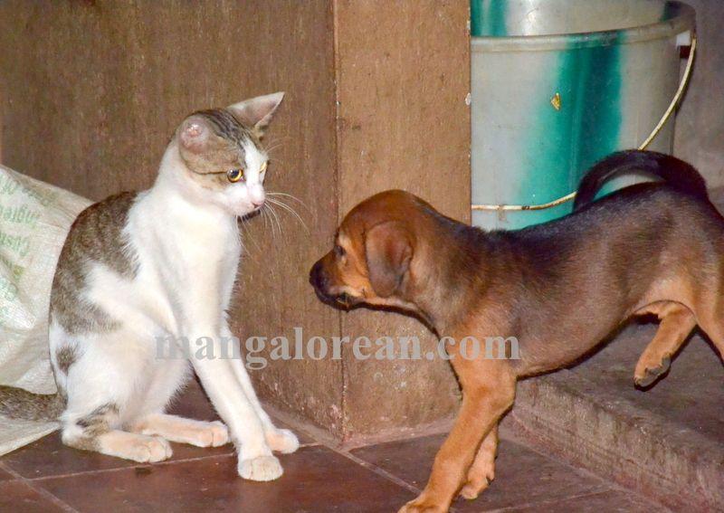 image004cat-dog-friend-020160505-004