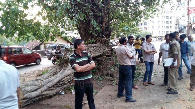 image004karangalpady-tree-20160519-004