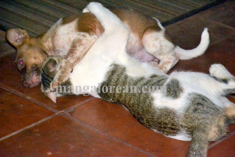 image007cat-dog-friend-020160505-007