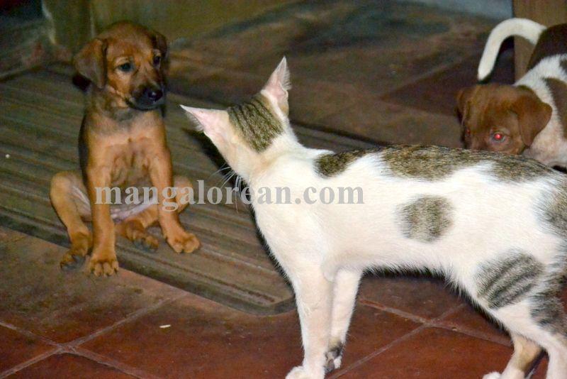 image008cat-dog-friend-020160505-008