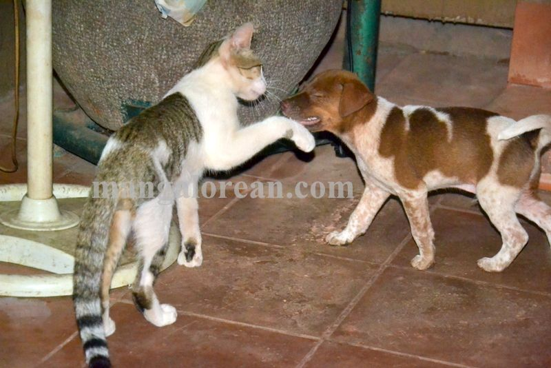 image009cat-dog-friend-020160505-009