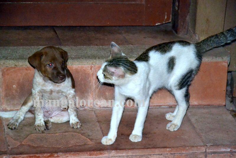 image012cat-dog-friend-020160505-012