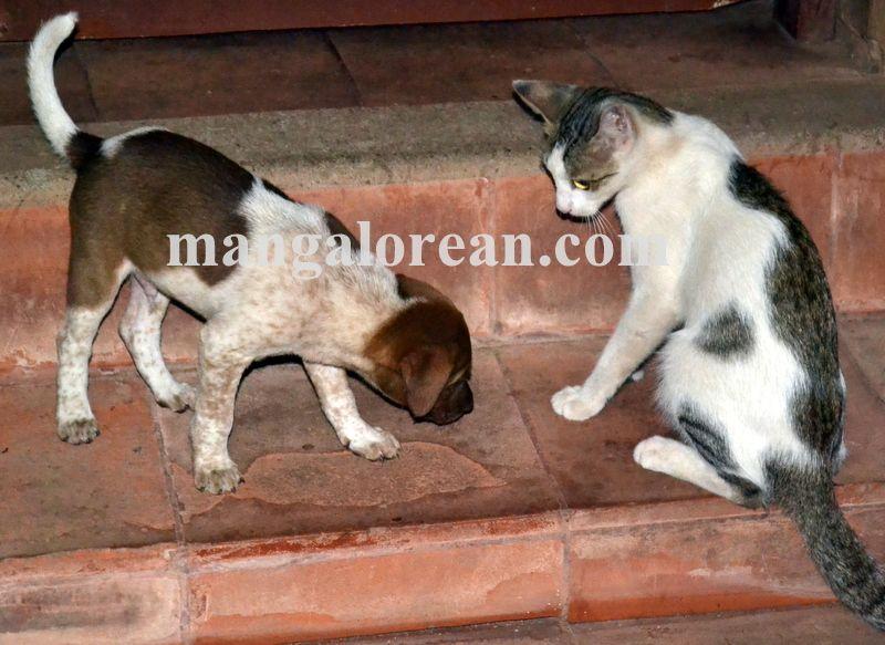 image013cat-dog-friend-020160505-013