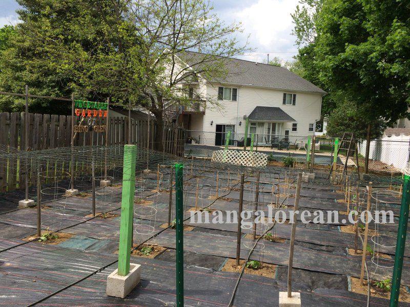 image016glen-leo-mendonca-kitchen-garden-020160521-016