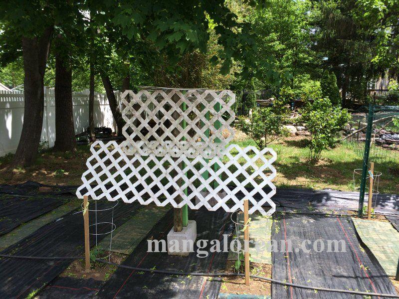 image020glen-leo-mendonca-kitchen-garden-020160521-020