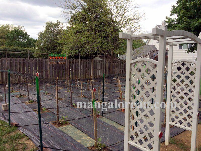 image023glen-leo-mendonca-kitchen-garden-020160521-023