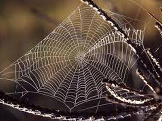 spider-web-20160518
